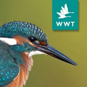 wild wetlands trust logo WWT
